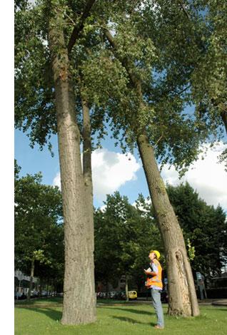 Groenddirectie Holland Toezicht